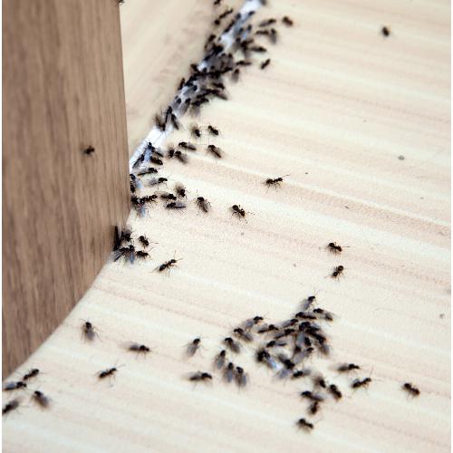 Ant Control Essex