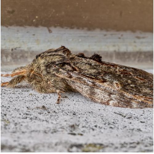Moth Control essex